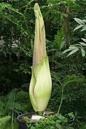 © Botanischer Garten, Uni Bayreuth